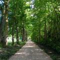 une belle allée de chênes vous amène au gîte Douceur Angevine