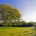 Unser Garten mit den Walnussbäumen hinter dem Haus