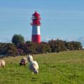 Der Leuchtturm Falshöft wird von Schafen bewacht
