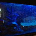 Декоративнй аквариум без обитателей
