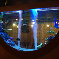 Декоративный пресноводный аквариум с цихловыми