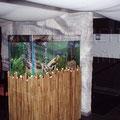 Пресный аквариум с цихлидами в ресторане