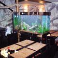 Пресноводный декоративный аквариум в суши-баре