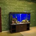 Пресноводный декоративный аквариум с цихлидами