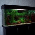Пресноводный аквариум с неонами
