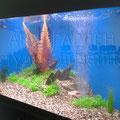 Декоративный аквариум с меченосцами в психологическом центре