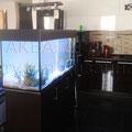 Пресноводный аквариум сразу после запуска