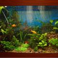 Пресноводный растительный аквариум