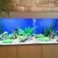Пресноводный декоративный аквариум с африканскими цихлидами