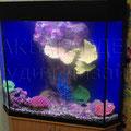 Пресноводный аквариум с пластиковыми декорациями для детской комнаты