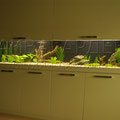 Пресноводный аквариум с астронотусами