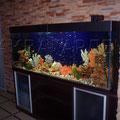 Декоративный пресноводный аквариум