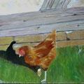 poule picorant 18cm x 24cm huile