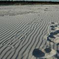 Spuren: Sandstrand in Dueodde / Bornholm