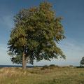 Baum und Räucherei: Svaneke / Bornholm
