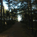 Wald: Dueodde / Bornholm