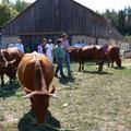 Die Züchter begutachten die Herde.