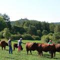 Vor malerischer Kulisse begutachten die Züchter die gelungenen Tiere der Familie Schaller aus Hohenburg.