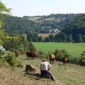 Jörg Bremond fotografiert am Steilhang einen Teil der Herde.