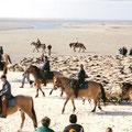 les chevaux de la baie de somme