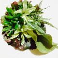 洋装用ヘッドドレス/多肉植物、カラーなど。 (オーダー品)