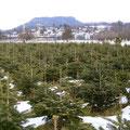 Christbaumplantage Blick gegen Norden