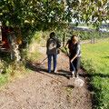 Baumnüsse werden aufgenommen