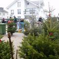 Reges Treiben beim Christbaumverkauf