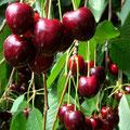 Süsse Früchte lachen uns an
