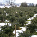 Christbaumplantage Blick gegen Süden