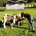 Steinbachgut Flachau - kinderboerderij