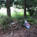 写真7 林床に運び出された草木