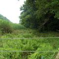 4 谷戸横断道下流右岸