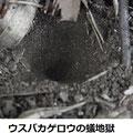ウスバカゲロウの蟻地獄 11/5