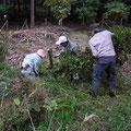 倒木の整理