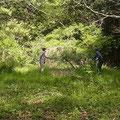 カナムグラの枯れた藪の刈り払い