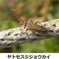 ヤトセスジジョウカイ 4/2