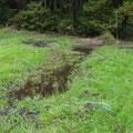 写真3 2番湿地の池の様子