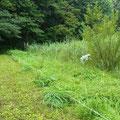 2 谷戸横断道上流側低茎湿地管理