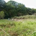写真4 谷戸横断道上流側ヨシ搬出