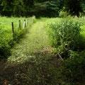 4 谷戸横断道草刈り後
