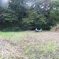 写真5 谷戸横断道上流側ヨシ搬出
