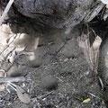 ウスバカゲロウの蟻地獄