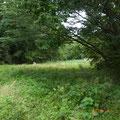 枝が切られ、見通しが良くなった谷戸奥
