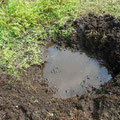 写真5 池に水が溜まる