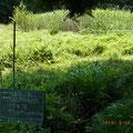 作業後 谷戸左岸から右岸を見て 高茎草は刈り、湿性ワラビ群生は保全
