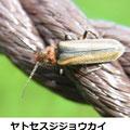 ヤトセスジジョウカイ  4/7