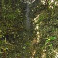 南から谷戸横断道に行く通路に水が流れている