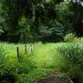 1 谷戸横断道草刈り前
