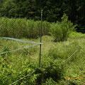 作業後 谷戸右岸から左岸をを見て 谷戸内に自生している小さなヤナギは残している